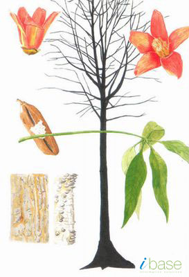 A Comprehensive Portal For Medicinal Herbs : Plant Info